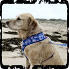 Boardies Wave Jumper Harness - Blue