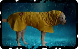 Puddle Splasher Raincoat